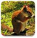 探秘动物森林