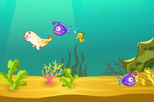 小海狮的生活