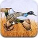 鸟类图片大找茬