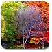 梦幻森林找树叶