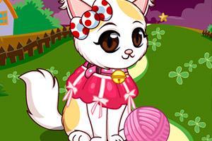 波斯猫小美