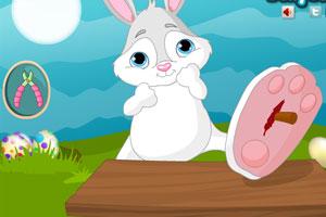 小兔子受伤